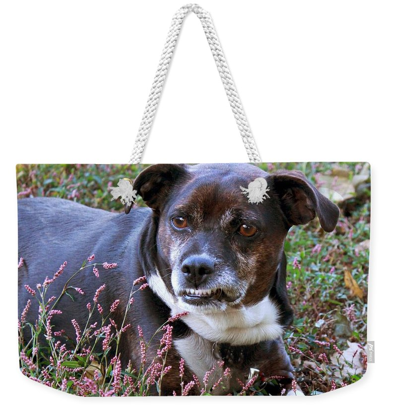 Dog Weekender Tote Bag featuring the photograph Dogg by Bonnie Willis