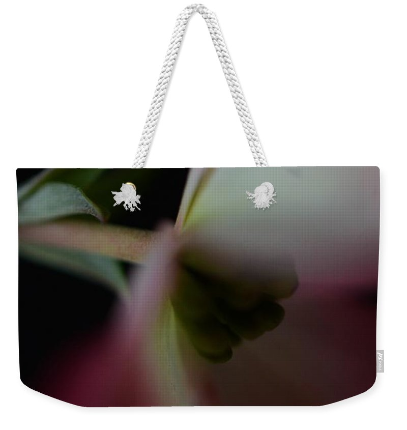 Dogwood Weekender Tote Bag featuring the photograph Dogwood Flower by Marianna Mills