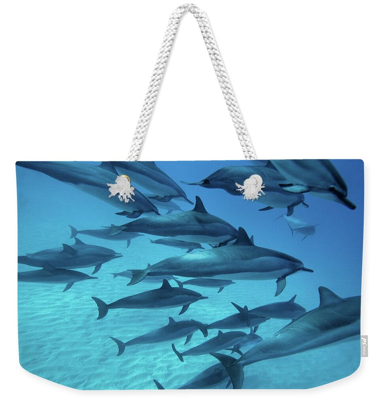 Underwater Weekender Tote Bag featuring the photograph Dolphins Spinners by M Swiet Productions