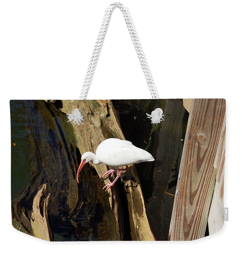 Bird Weekender Tote Bag featuring the photograph White Ibis Bird by Aimee L Maher ALM GALLERY