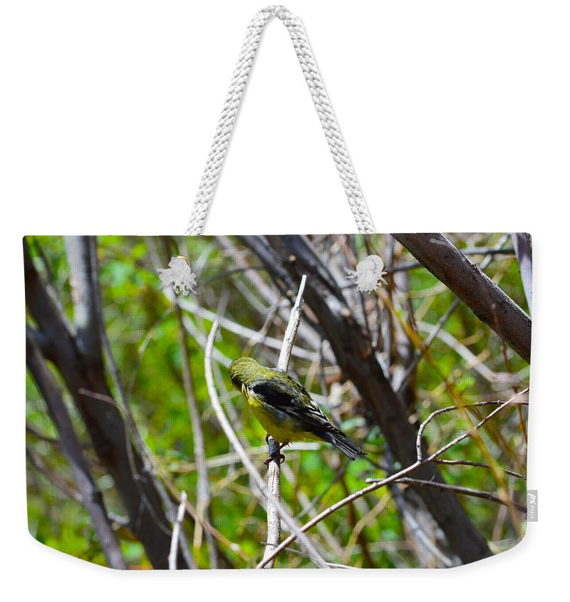 Bird Weekender Tote Bag featuring the photograph Don't Look Here Bird by Brent Dolliver