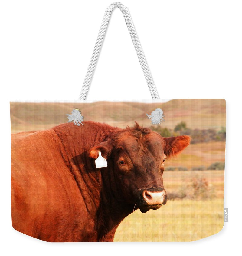 Bull Weekender Tote Bag featuring the photograph Dont Mess With The Bull by Jeff Swan