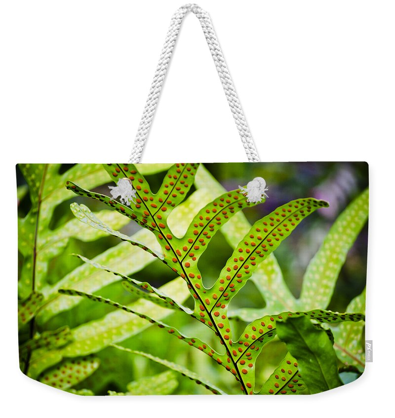 Phymatosorus Grossus Weekender Tote Bag featuring the photograph Dotty by Christi Kraft