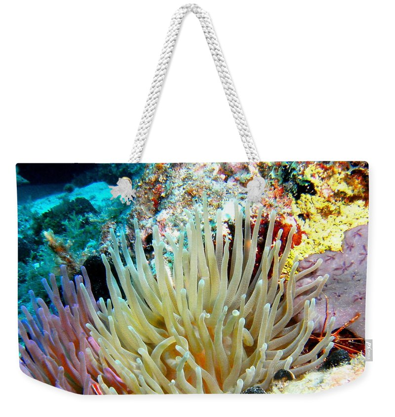 Nature Weekender Tote Bag featuring the photograph Double Giant Anemone And Arrow Crab by Amy McDaniel