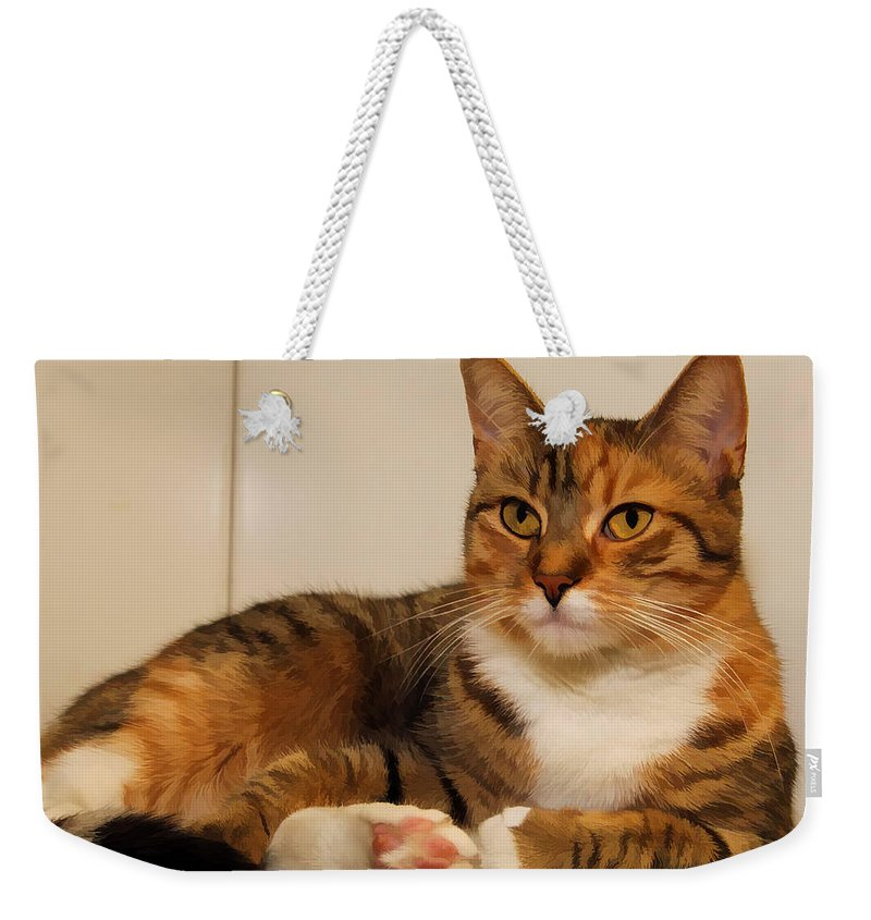 Double Tabby Weekender Tote Bag featuring the photograph Double Tabby by Joyce Baldassarre