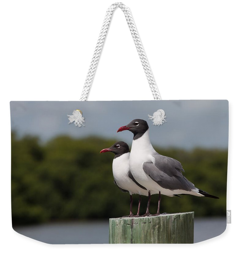 Adult Weekender Tote Bag featuring the photograph Double Take by John M Bailey