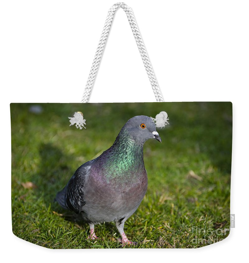 Dove Weekender Tote Bag featuring the photograph Dove by Mats Silvan
