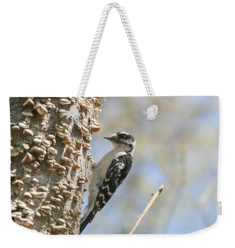 Woodpecker Weekender Tote Bag featuring the photograph Downy Pause by Neal Eslinger