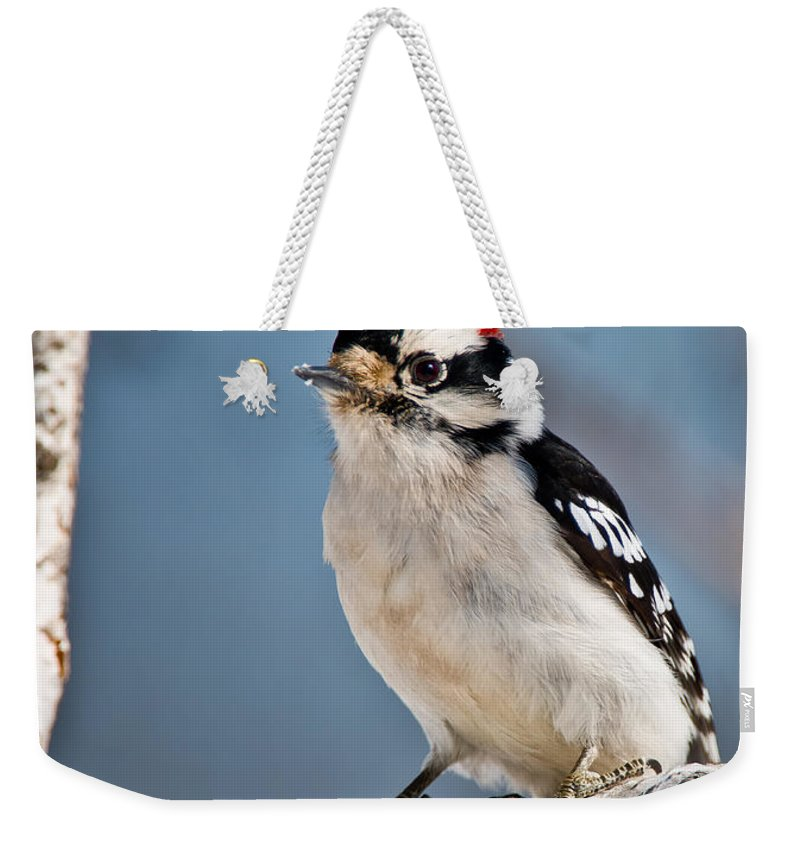 Downy Woodpecker Weekender Tote Bag featuring the photograph Downy Woodpecker Pictures 39 by World Wildlife Photography