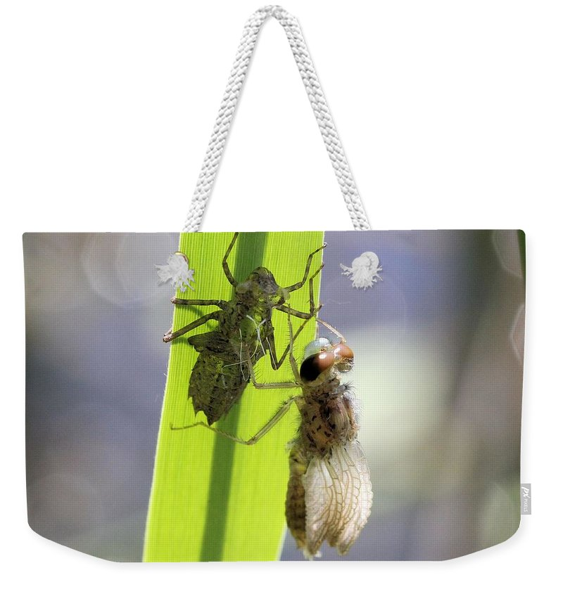 Dragonfly Weekender Tote Bag featuring the photograph Dragonfly Metamorphosis - Fourth In Series by Doris Potter