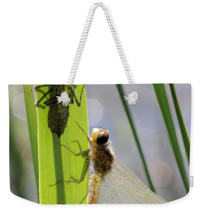 Dragonfly Weekender Tote Bag featuring the photograph Dragonfly Metamorphosis - Seventh In Series by Doris Potter