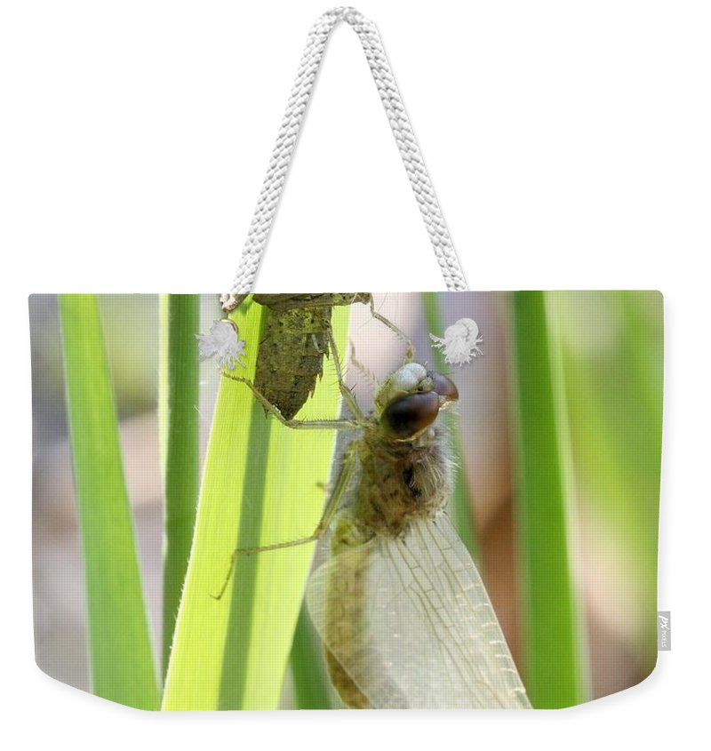 Dragonfly Weekender Tote Bag featuring the photograph Dragonfly Metamorphosis - Sixth In Series by Doris Potter