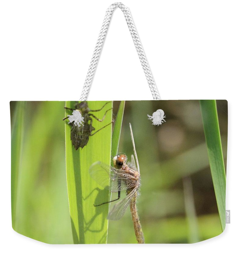 Dragonfly Weekender Tote Bag featuring the photograph Dragonfly Metamorphosis - Tenth In Series by Doris Potter