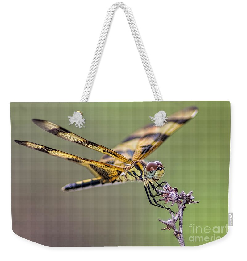 Dragonfly Weekender Tote Bag featuring the photograph The Halloween Pennant Dragonfly by Olga Hamilton