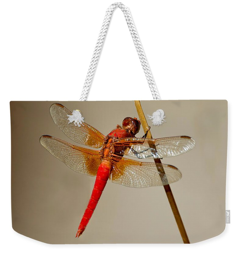 Animal Weekender Tote Bag featuring the photograph Dragonfly On Dead Reed by Anthony Mercieca