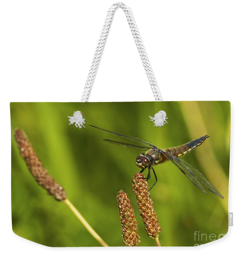 Dragonfly Weekender Tote Bag featuring the photograph Dragonfly On Seed Pod 2 by Sharon Talson