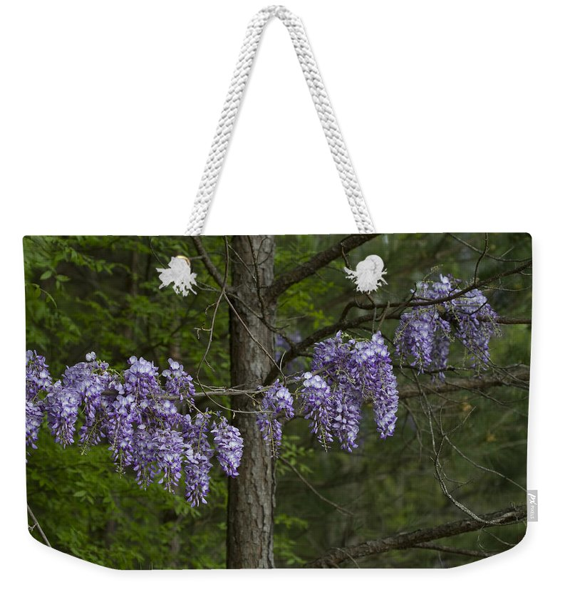 Wisteria Frutescens Weekender Tote Bag featuring the photograph Draping Wisteria Frutescens Wildflower Vines by Kathy Clark
