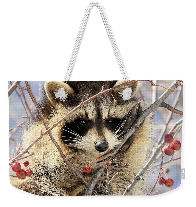 Raccoon Weekender Tote Bag featuring the photograph Dreamy by Doris Potter