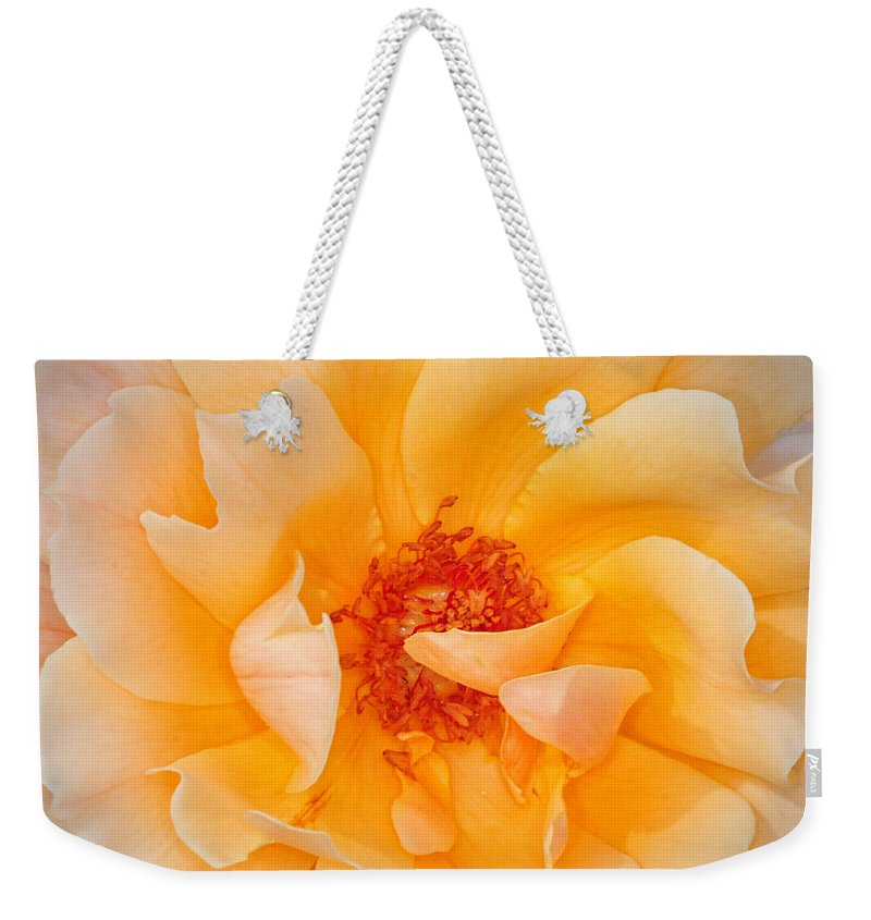Rose Weekender Tote Bag featuring the photograph Dreamy Orange Rose by Dave Mills