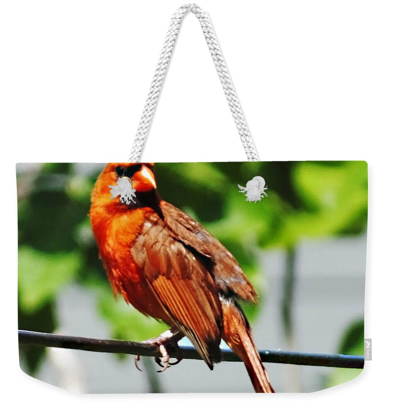 Cardinal Weekender Tote Bag featuring the photograph Dressed In Red by Lizi Beard-Ward