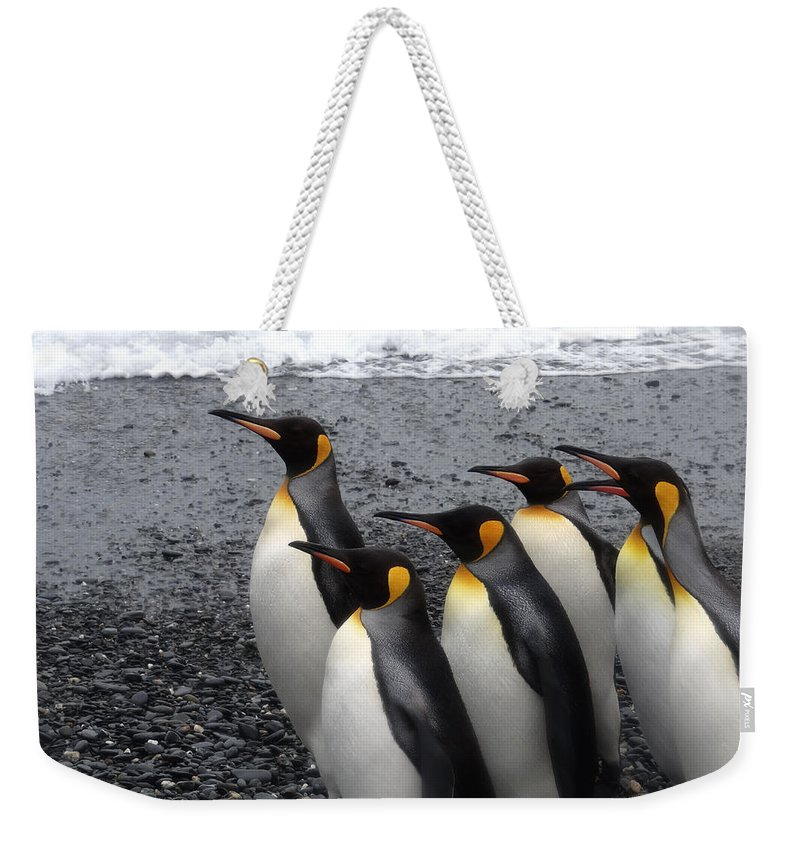 Water Weekender Tote Bag featuring the photograph Drill Sergeant by Ginny Barklow