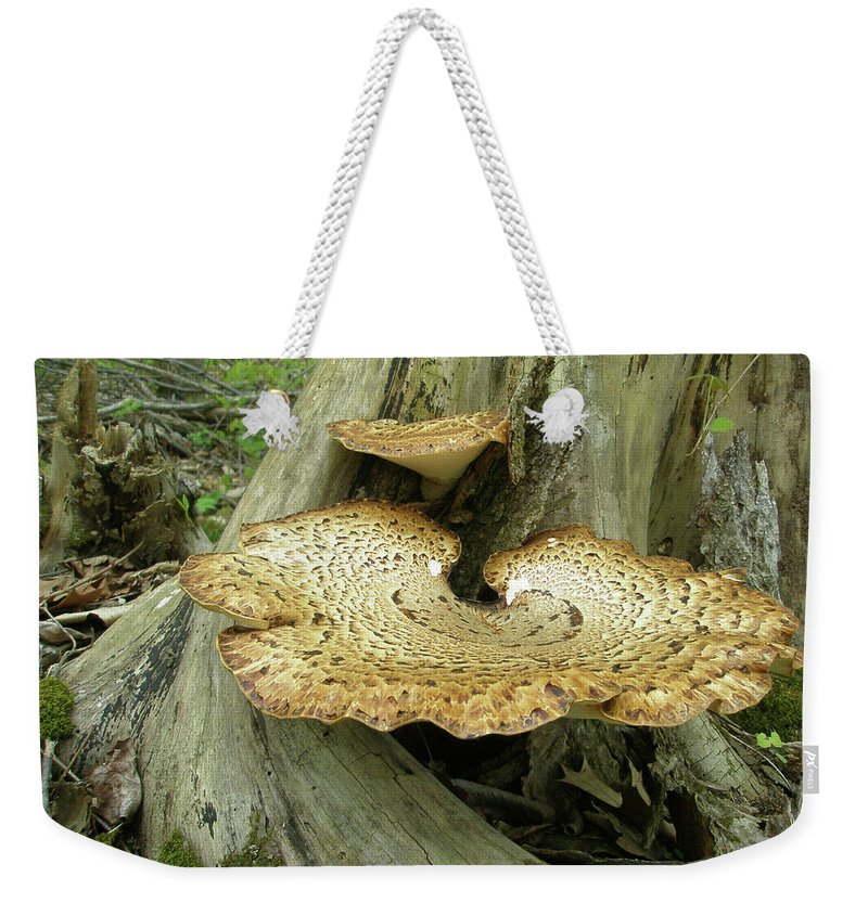 Shelf Weekender Tote Bag featuring the photograph Dryads Saddle Bracket Fungi - Polyporus Squamosus by Mother Nature