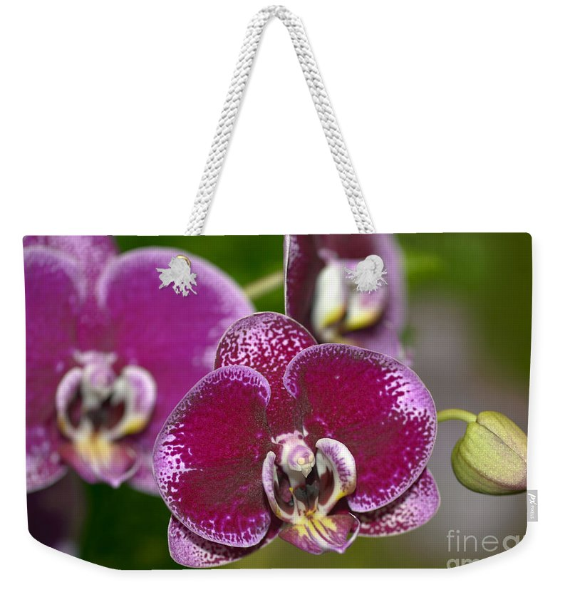Orchid Weekender Tote Bag featuring the photograph Dtps. Shu Long Prince 8199 by Terri Winkler