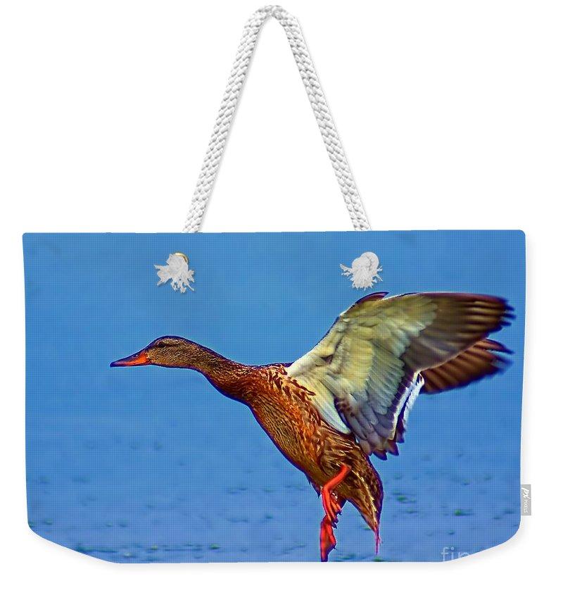 Duck Weekender Tote Bag featuring the photograph Duck Landing by Nick Zelinsky