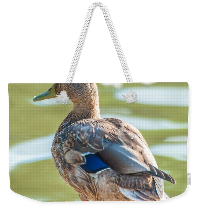 Bird Weekender Tote Bag featuring the photograph Duckling By The Lake by Amel Dizdarevic