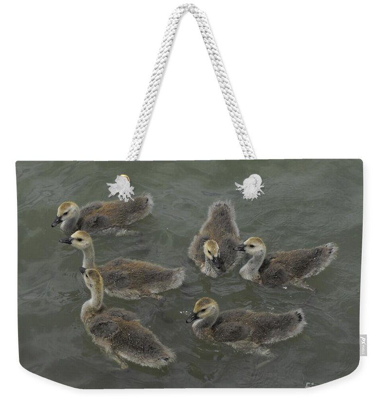 Ducks Weekender Tote Bag featuring the photograph Ducklings by Brandi Maher
