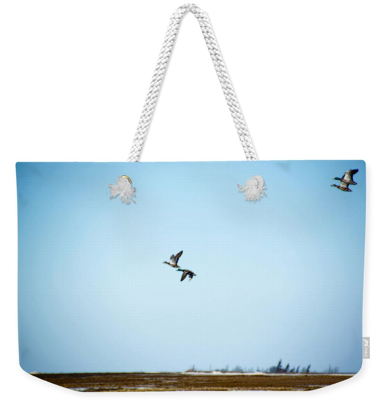 Sky Full Of Ducks Weekender Tote Bag featuring the photograph Ducks In Pairs by Tracy Winter