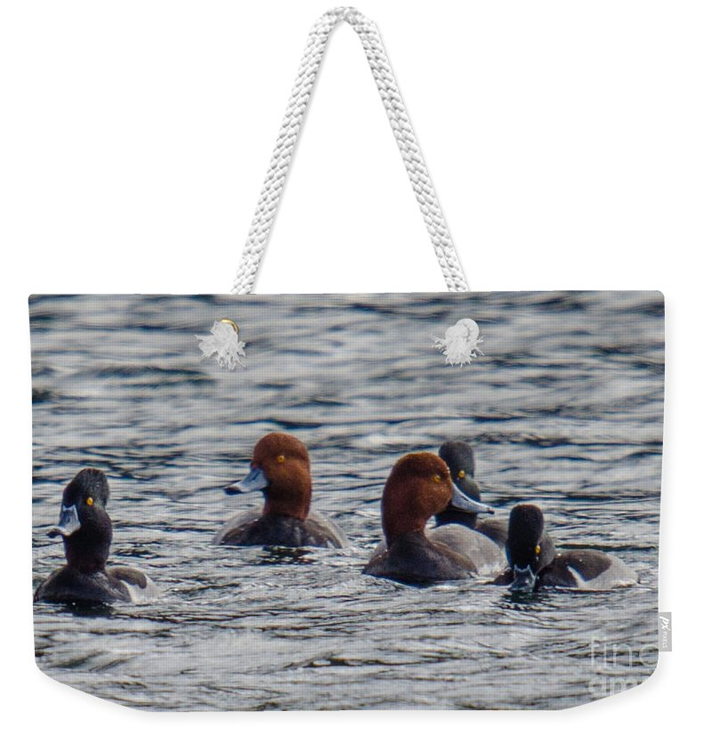 Ducks Weekender Tote Bag featuring the photograph Ducks In Pond by Dale Powell
