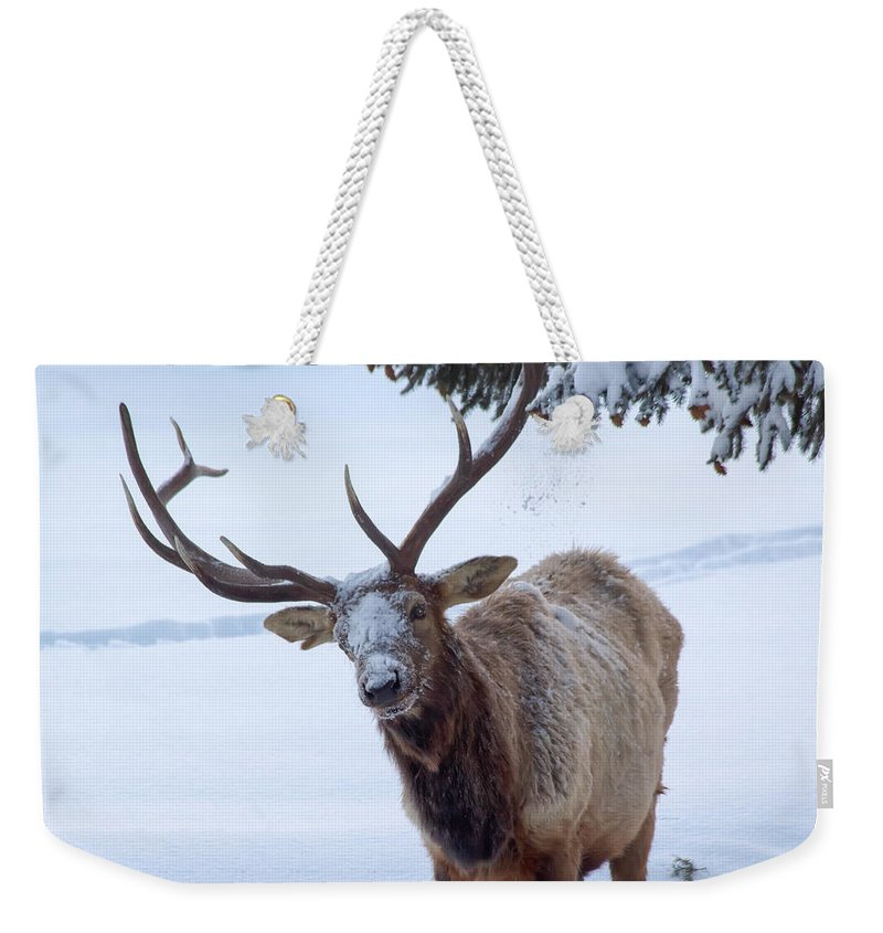 Snow Weekender Tote Bag featuring the photograph Dumped On by Shane Bechler