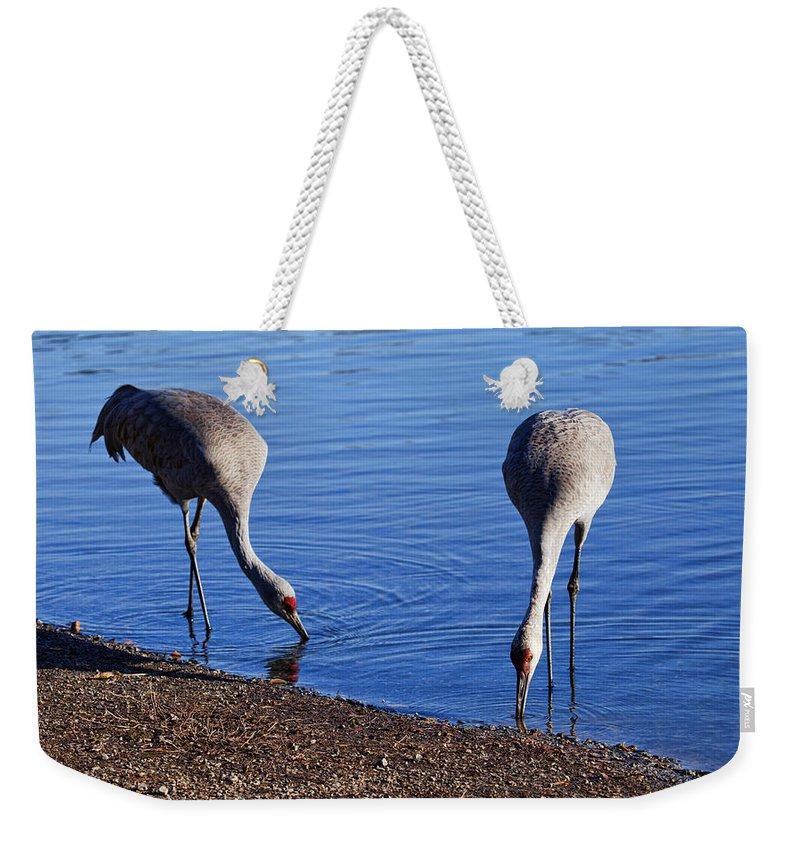 Sandhill Cranes Weekender Tote Bag featuring the photograph Duo by Karen Ulvestad
