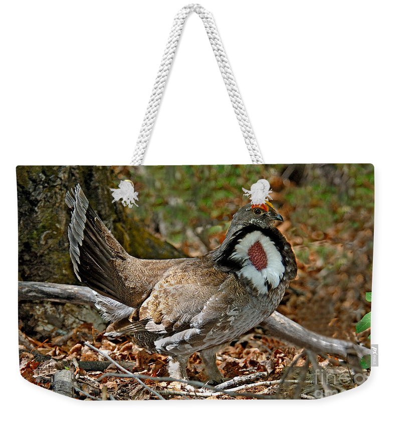 Animal Weekender Tote Bag featuring the photograph Dusky Grouse Cock by Anthony Mercieca