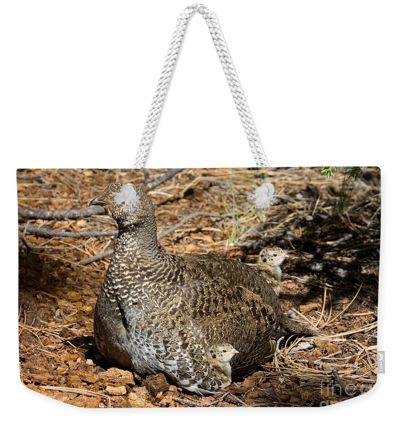 Animal Weekender Tote Bag featuring the photograph Dusky Grouse With Chicks by Anthony Mercieca
