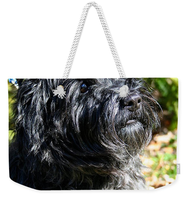 Dog Weekender Tote Bag featuring the photograph Dusty by Susan Herber