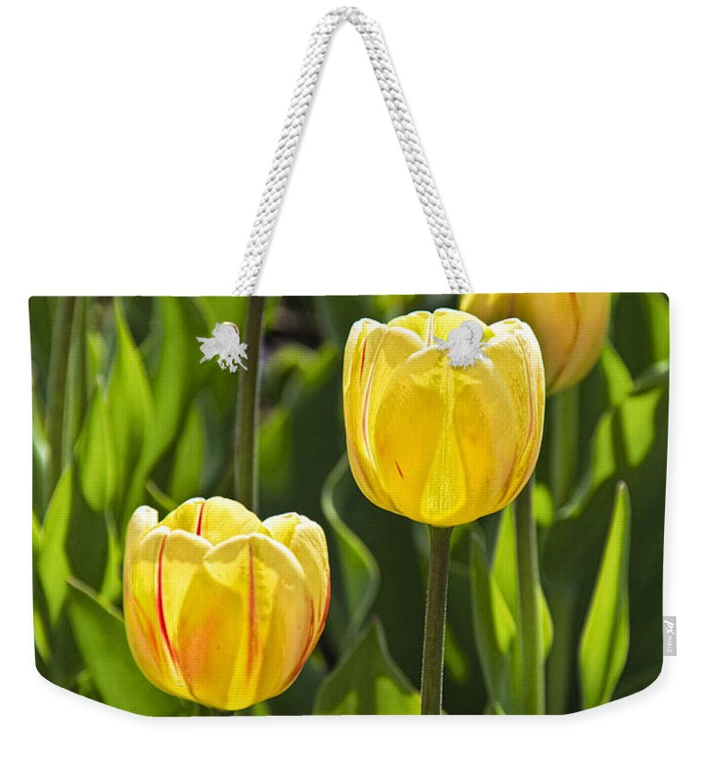 Art Weekender Tote Bag featuring the photograph Dutch Yellow Tulip Flowers On Windmill Island In Holland Michigan by Randall Nyhof