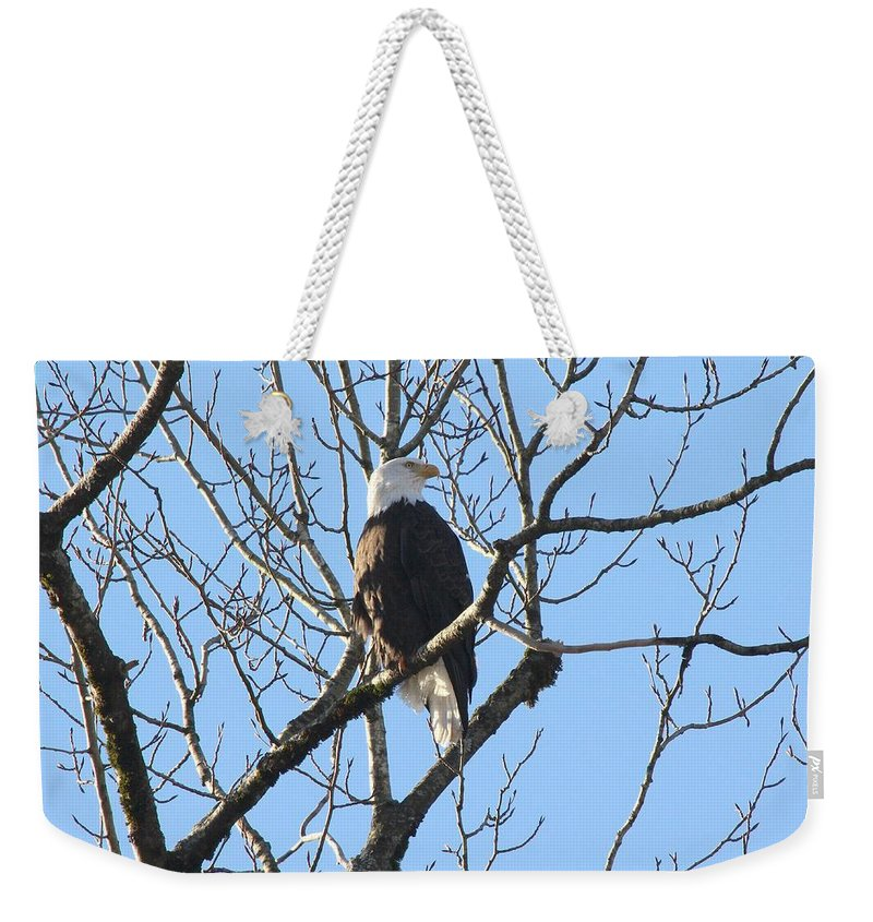 Bald Eagle Weekender Tote Bag featuring the photograph Bald Eagle Profile by Ian Mcadie