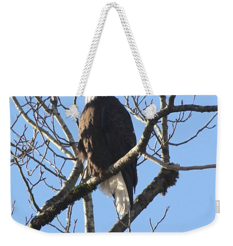 Eagle Weekender Tote Bag featuring the photograph Bald Eagle Sunny Perch by Ian Mcadie
