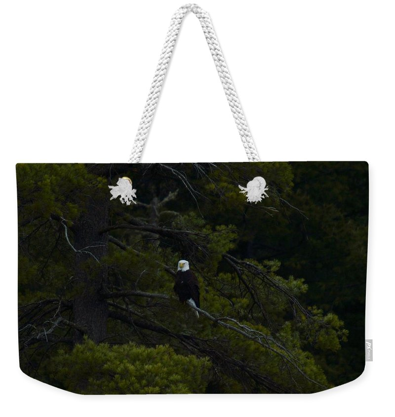 Bald Eagle Weekender Tote Bag featuring the photograph Eagle In White Pine by Thomas Phillips