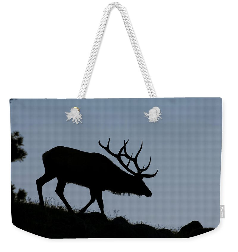Early Morning Weekender Tote Bag featuring the photograph Early Morning Bull Elk by Gary Langley