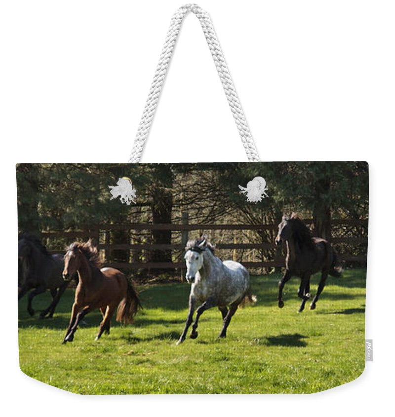 Early Morning Romp Weekender Tote Bag featuring the photograph Early Morning Romp by Wes and Dotty Weber