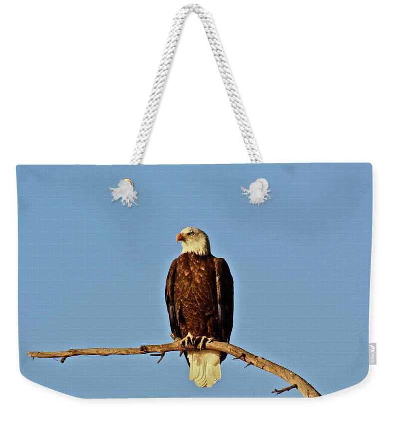 Eagle Weekender Tote Bag featuring the photograph Early Morning Surprise by Diana Hatcher