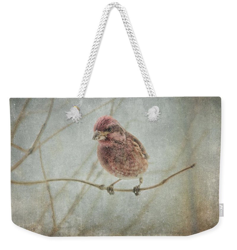 Finch Weekender Tote Bag featuring the photograph Early Spring Visitor by Sue Capuano