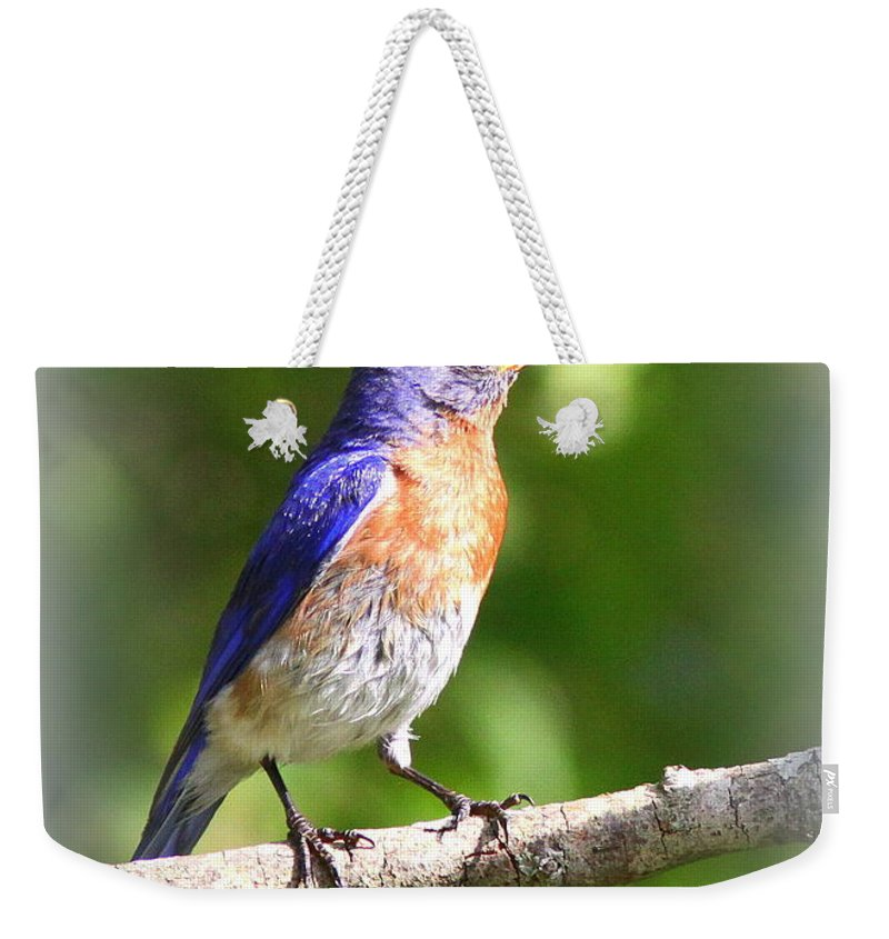 Eastern Bluebird Weekender Tote Bag featuring the photograph Eastern Bluebird - After His Bath by Travis Truelove
