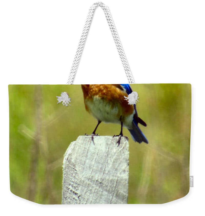 Eastern Weekender Tote Bag featuring the photograph Eastern Bluebird Pose by Art Dingo