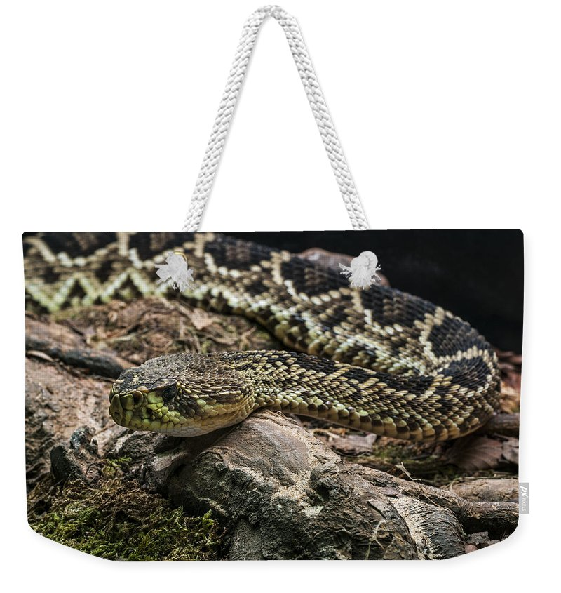 Eastern Diamondback Rattlesnake Weekender Tote Bag featuring the photograph Eastern Diamondback Rattlesnake 2 by Arterra Picture Library