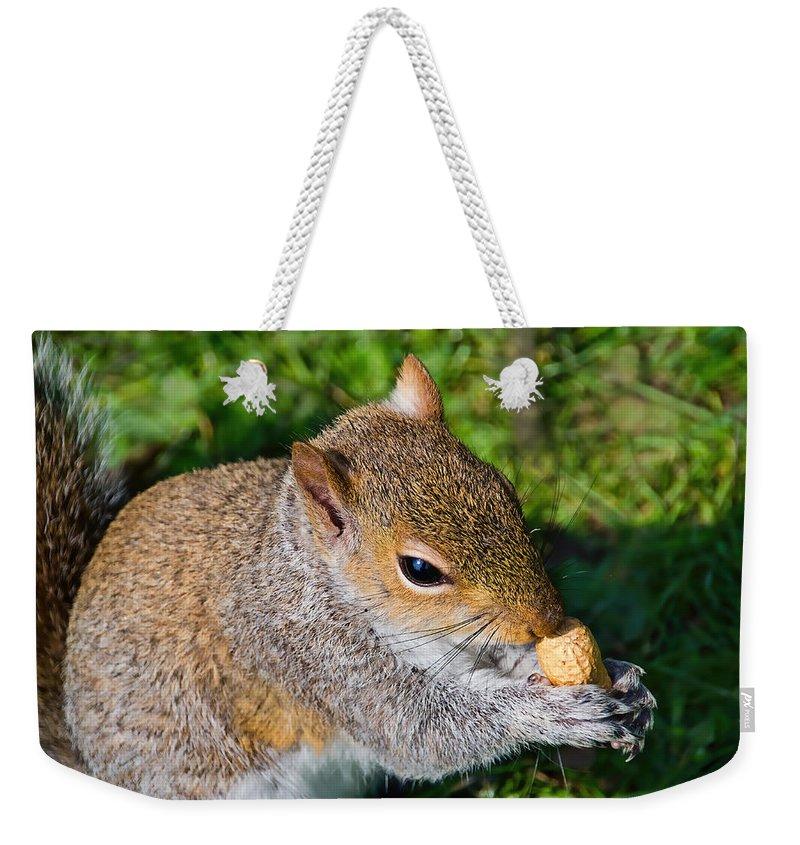Squirrel Weekender Tote Bag featuring the photograph Eastern Grey Squirrel by Susie Peek