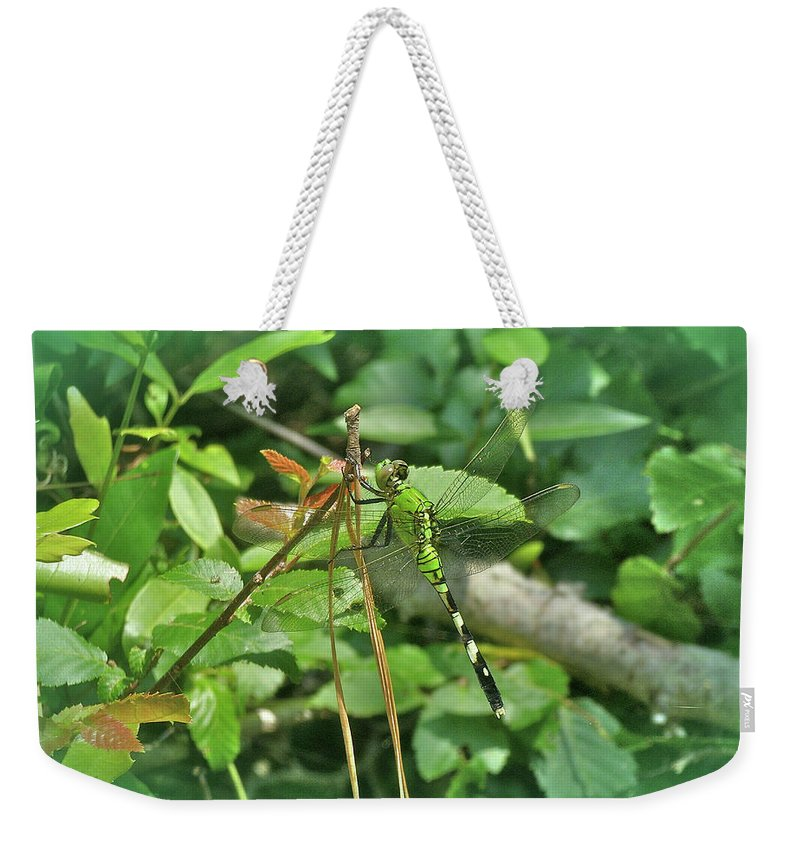 Dragonfly Weekender Tote Bag featuring the photograph Eastern Pondhawk Female Dragonfly - Erythemis Simplicicollis - On Pine Needles by Mother Nature